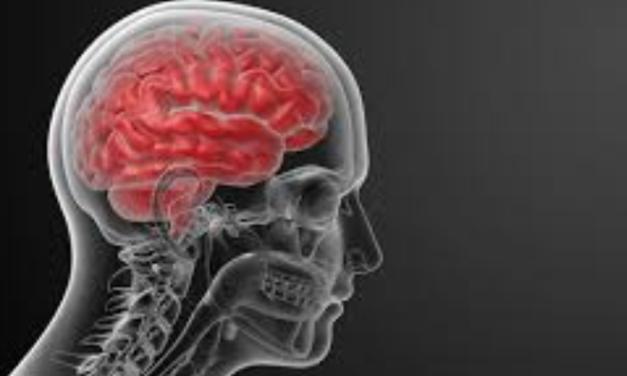 Hjernerystelse – efterlysning